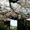 桜門, Kuva lisätty:  torstai, 13. huhtikuuta 2017, klo 05.38