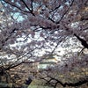 桜門, Kuva lisätty:  keskiviikko, 3. huhtikuuta 2013, klo 23.47