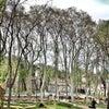 Gülhane Parkı, إضافة الصورة: الأحد ٢١ نيسان أبريل ٢٠١٣ ٢٣:٠٧