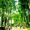 Gülhane Parkı, إضافة الصورة: الخميس ٣٠ أيار مايو ٢٠١٣ ١٧:٠٧