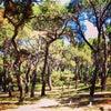 Gülhane Parkı, إضافة الصورة: الإثنين ٢٧ أيار مايو ٢٠١٣ ٢٠:٠٥