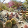 Photo of The Living Desert