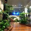 Lapangan Terbang Changi Singapura, Photo added: Saturday, November 2, 2013 5:01 PM