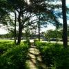 Foto Parque da Cidade Sarah Kubitschek, Brasília