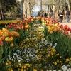 Gülhane Parkı, إضافة الصورة: الخميس ١١ نيسان أبريل ٢٠١٣ ١٦:٠١
