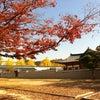 경복궁, Photo added: Wednesday, October 31, 2012 3:21 AM