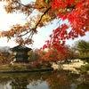 경복궁, Photo added: Friday, November 9, 2012 7:27 AM
