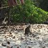 monkey beach, 写真追加: 2018年1月20日 12:17 土曜日