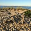 Joseph Sylvia State Beach, Photo added:  Thursday, September 22, 2016 11:58 PM