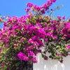 Playa Ocean Park, Photo added:  Thursday, August 6, 2015 3:10 AM
