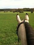 Quail Roost Farm Riding School