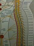 Austin Lake Chiropractic