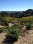 Montemaggiore Winery
