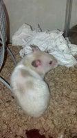 Benson's Pet Center