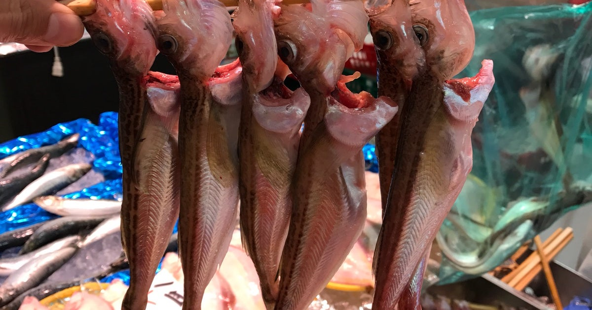 前橋 魚類 角 上