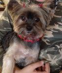 Ruff Cuts Pet Grooming