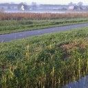 ingrid-van-der-velde-16183718