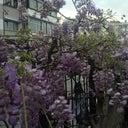 mehmet-pehlivanli-135844788