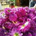 rosalie-van-druten-12667106
