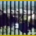 angelo-buchwald-34073845