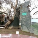 igor-caviroski-37278503