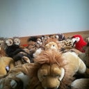 kralle-lion-46749833
