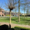 jeffrie-van-der-tol-4934062