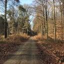 desiree-van-lunenburg-74926012