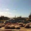 olivier-hoogeveen-875057