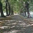rieneke-peet-8908393