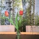 nadine-rosenkranz-9172315