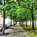 liesbeth-vollemans-5409711