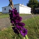fleur-pakker-875493