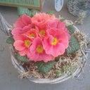 fleur-van-de-water-12363038