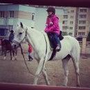 Белая лошадь, конноспортивный клуб