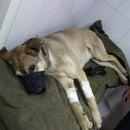 Биовет, ветеринарный центр