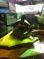 Two Turtles Pet Shop