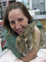 Chicago Exotics Animal Hospital