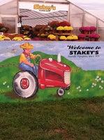 Stakey's Pumpkin Farm