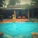 Foto Green Leaf, Lombok