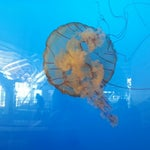 Look for the wonderful aquatic displays in both the International departures and arrivals areas.