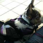 If your traveling with a service dog don't be nervous. Everyone knew what to do and no one gave me the third degree or asked a lot of questions. Made me much more comfortable!!!