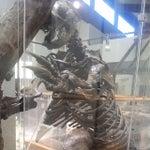 Roynon Museum Of Paleontology