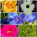 Fort Lauderdale Florist