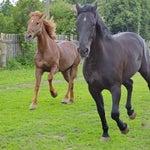 Пахнет конями:)
