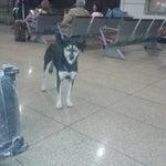 Si les parece inverosímil que en Maiquetia haya un perrito callejero dentro, pues aquí les presento al peludo que desea viajar, desde la puerta Nro. 5