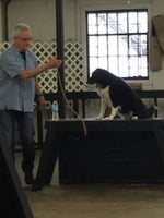 Chicago Canine Academy