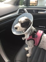 Well-Pet Vet Clinic