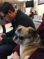 Delaware Valley Veterinary Hospital