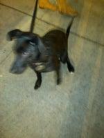 AnimalSense Canine Training & Behavior